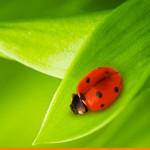 lcmc slider green duurzaam durable cad cam software